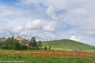 San Quirico d'Orcia, campagna toscana, cipressi d'Orcia